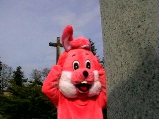 Pink Rabbit in Strausberg